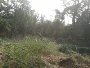 restore Georgian garden